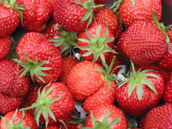 Did you know some strawberry facts west harlem csa for Interesting facts about strawberries